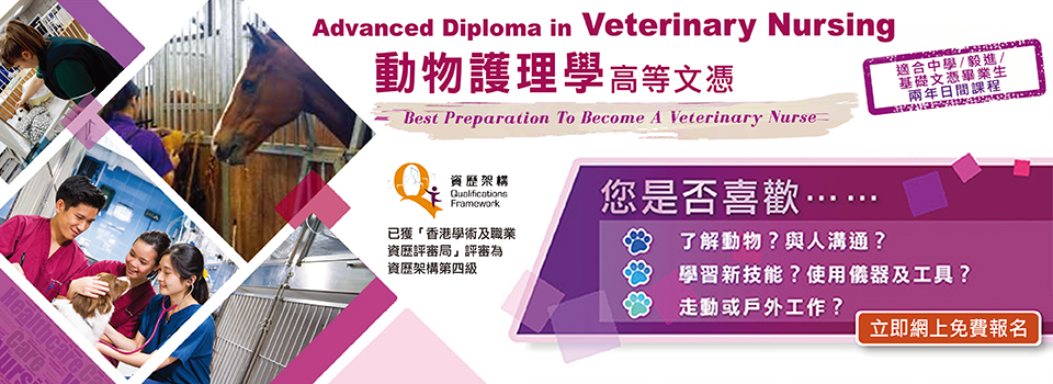 Advanced Diploma in Veterinary Nursing 動物護理學高等文憑